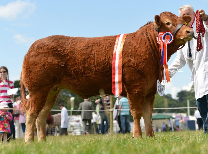Claragh Heidi crowned NI Limousin Heifer Debry Champion 2013